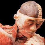 <b>Body the Exhibition</b>