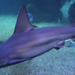 <b>Španělsko, Mallorca - Palma Aquarium</b>