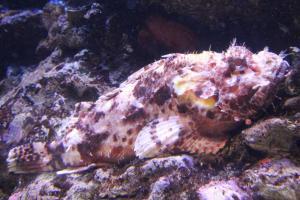 Palma aquarium 04