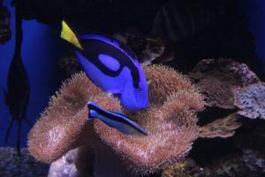 Palma aquarium 06