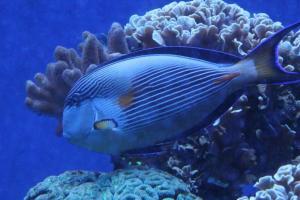 Palma aquarium 07