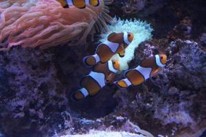 Palma aquarium 08