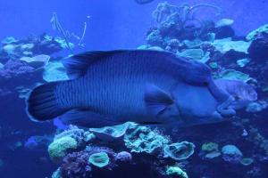 Palma aquarium 10