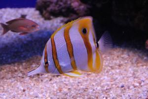 Palma aquarium 12