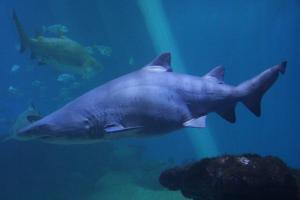 Palma aquarium 16