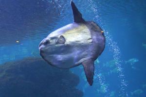 Palma aquarium 17
