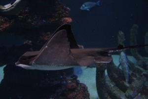 Palma aquarium 18